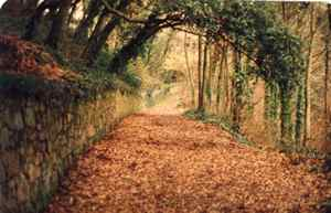 Cliff path in Autumn